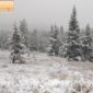 Yellowstone in the snow and rain.