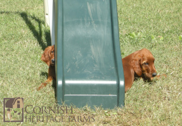 puppy-3-oct.jpg
