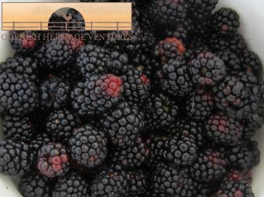 Blackberries from friends