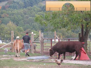 Happy cows :)