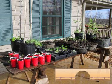 My seedlings!