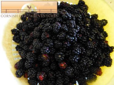 Blackberry Season is here again :)