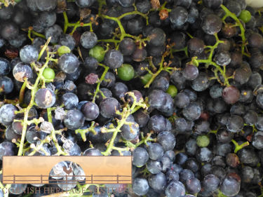 Grapes, Grapes, Grapes