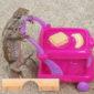 Caleb and his lizard